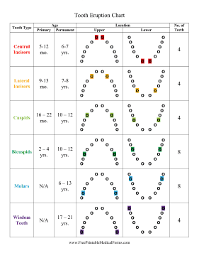tooth eruption chart medical form
